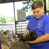 """Thirteen-year-old Parker Wilson, of Carl Junction, handles his Grand Champion blue cochin chicken, """"Cindy,"""" during the Jasper County Free Youth Fair on Friday at Municipal Park in Carthage. Wilson won the distinction in the Asiatic chicken category.<br /> Globe 