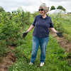 Globe/Roger Nomer<br /> Jessie Cox talks about growing blackberries at her farm in Mt. Vernon.