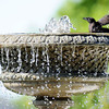 Globe/T. Rob Brown<br /> A bird takes a bath in the E.L. Dale Memorial Gardens fountain at the Carthage Public Library on Saturday, June 2, 2012.