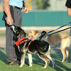 Globe/Roger Nomer<br /> Joplin Humane Society dogs Ashley, left, and Tazz get a drink from umpire Bill Gannaway during the Joplin Outlaws baseball game at Wendell Redden Stadium on Tuesday evening.  The dogs were part of the Outlaws' Humane Society Food Drive and Adopt night.