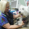 Globe/Roger Nomer<br /> Mary Ann Schlau grooms Brady at the Golden Paw Pet Resort on North Main on Wednesday afternoon.