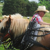 """Globe/Roger Nomer<br /> Larry Osborn, Asbury, pats his horses after hitching up his wagon for the """"Echoes of the Trail"""" ride out of Liberal on Thursday."""
