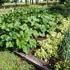 Globe/Roger Nomer<br /> Becky Brannack's backyard garden is shared with her friends and students.