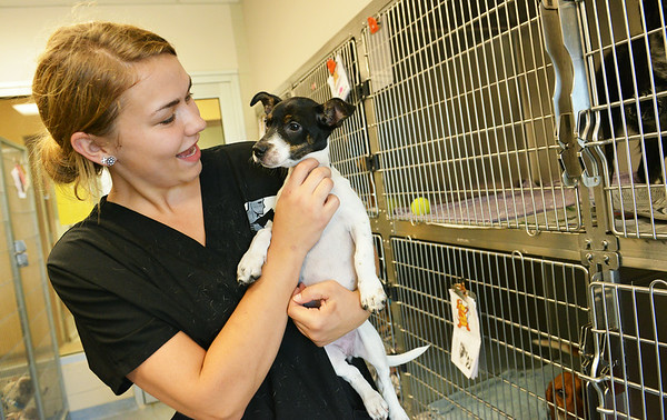 Globe/Roger Nomer<br /> Heather Clark, kennel tech at the Joplin Humane Society, plays with an unnamed dog on Monday afternoon at the shelter.