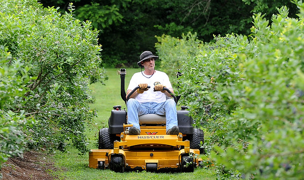 Matthew Warren mows between two of the 36 rows of blueberries on Friday at the Robertson Family Farm on Saginaw road on Friday. Saturday marks opening day for berry pickers at the farm.<br /> Globe | Laurie Sisk