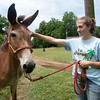 Globe/Roger Nomer<br /> Jesse Friend pets her 4H project Angel on Friday morning.