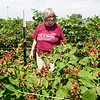 Ray's Farm to Market, LLC owner Jessie Cox, walks near blackberry plants on Saturday near Mount Vernon. Cox hopes many will ripen before her anticipated Thursday opening.<br /> Globe | Laurie Sisk