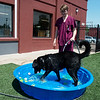 Globe/Roger Nomer<br /> Eli Oberg fills a pool for Bear at Main Street Pet Care on Tuesday.