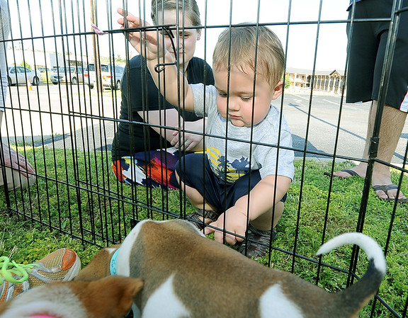 One-year-old Matthias Gonzalez enjoys a visit with a couple of puppies courtesy of the Joplin Humane Society on Thursday night at the Will's Place Kids Block Party. Also pictured is his mother, Kaitlyn Gonzalez.<br /> Globe | Laurie Sisk