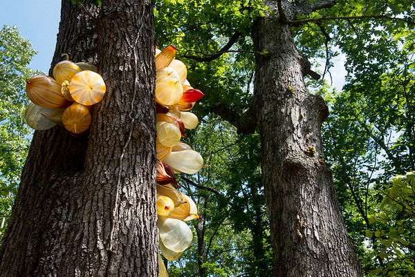 Globe/Roger Nomer<br /> An example of Chihuly's chandelier sculptures hang in the trees at Crystal Bridges.