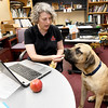 """Deb Markman, resource develoment director at Economic Security Corporation, gives her 9-month-old English Mastiff, """"Lincoln,"""" an afternoon treat on National Take Your Dog to Work Day on Friday at ESC.<br /> Globe 