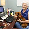 "Robin Smith, assistant community development director at Economic Security Corporation, sits at her desk with ""Rudy,"" her long hair dachsund on National Take Your Dog to Work Day on Friday at ESC.<br /> Globe 