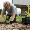 Globe/Roger Nomer<br /> Kim DeMoss, president of Regional Health and Welfare, works with plants on Friday at Crosslines as part of the United Way Day of Caring.