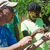 Globe/Roger Nomer<br /> Chris Pistole, education director at Wildcat Glades Audoban Center, helps Charline Meadows, 8, release a dragonfly on Tuesday during the Camp Wildcat Summer Day Camp at the Center.