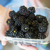 Globe/Roger Nomer<br /> June is the start of blackberry season at Ray's Farm to Market in Mt. Vernon.