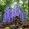 Globe/Roger Nomer<br /> Chihuly's Neodymium Reeds are on display as part of Crystal Bridges' Chihuly in the Forest exhibit.