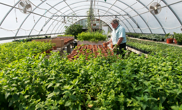 Globe/Roger Nomer<br /> Gilbert Johnston, horticulture mananger, works in the Downstream greenhouse on June 2.