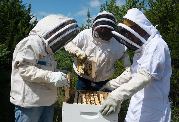 (from left) Mary Kilmer, assistant professor of biology and environmental health, Dale Foley, founder of the Joplin Area Beekeepers, and Khye Hill, a Missouri Southern junior from Carthage, examine a bee hive on Tuesday at MSSU.<br /> Globe   Roger Nomer