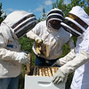 (from left) Mary Kilmer, assistant professor of biology and environmental health, Dale Foley, founder of the Joplin Area Beekeepers, and Khye Hill, a Missouri Southern junior from Carthage, examine a bee hive on Tuesday at MSSU.<br /> Globe | Roger Nomer