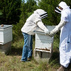 Mary Kilmer, assistant professor of biology and environmental health at Missouri Southern, left, and Khye Hill, a MSSU junior from Carthage, work with a hive on Tuesday at MSSU.<br /> Globe | Roger Nomer