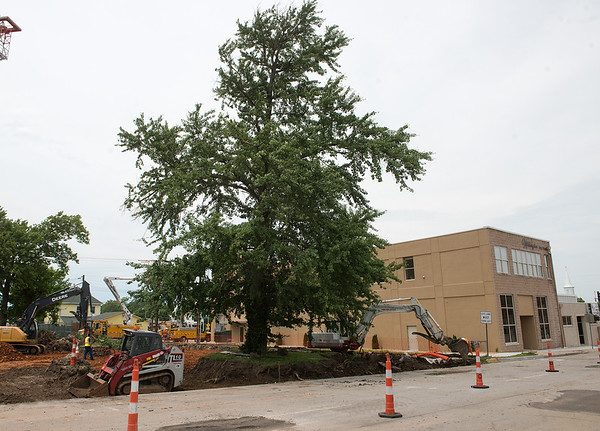 Construction crews work around a Ginko tree at the 700 block of Wall on Thursday in Joplin.<br /> Globe | Roger Nomer