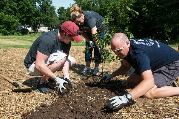 (from left) Luke McSloy, an IT tech at HE Williams, and Dawn Haase, purchasing manger, help homeowner Blake O'Dell plant a tree on Thursday during a Habitat for Humanity event. <br /> Globe | Roger Nomer