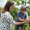 Bethany Meyer, manager at Ray's Farm to Market, left, and Jessie Cox, owner, look at ripen blackberries at the farm in Mt. Vernon on Thursday.<br /> Globe | Roger Nomer