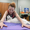 """Oxford the Great"" opts to forego the exercise and just relax as he teams with yoga partner Jessica Wood for the Cats and Yoga Mats event on Saturday night at the Joplin Humane Society. The class, led by Millenium Family Fitness yoga instructor Rebecca Cutler-Metzger offered participants a chance to practice yoga and also brought attention to the need for cat adoptions at the JHS.<br /> Globe 