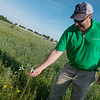 Jason Grossman, manager of Transmission and Distribution Vegetation, talks about a wildflower at the Liberty Utilities facility on Kodiak Road on Tuesday.<br /> Globe | Roger Nomer