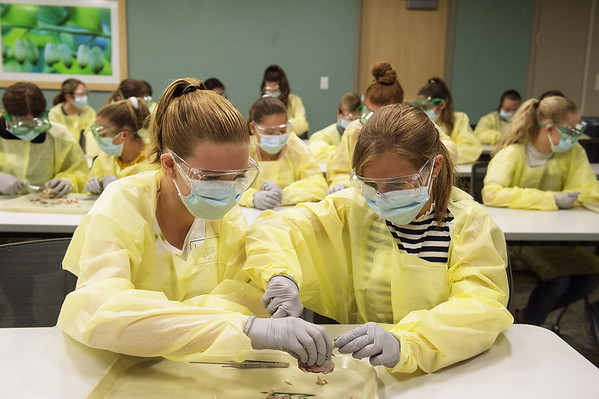 Alyssa Walker, 13, left, and Brooke Collard, 11, dissect a cow eyeball during Monday's MASH Camp at Mercy Hospital.<br /> Globe | Roger Nomer