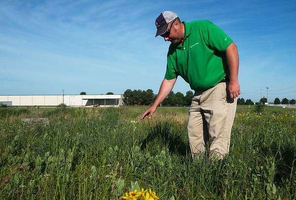 Jason Grossman, manager of Transmission and Distribution of Vegetation, talks about wildflowers at the Liberty Utilities facility on Kodiak Road on Tuesday.<br /> Globe | Roger Nomer