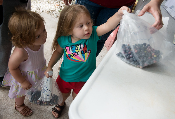 London Merl, 2, takes home blueberries picked by herself and friend Brynn Wilkerson, 1, at Robertson Family Farm on Tuesday.<br /> Globe | Roger Nomer