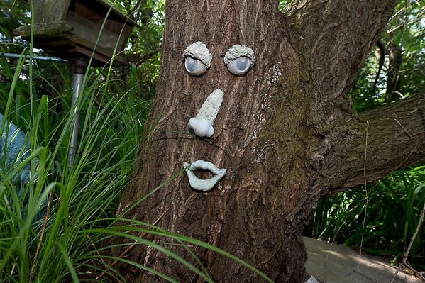 A whimsical face finds a home on an old tree in the only residence in Webb City's King Jack Park. The home is the residence of Stan and Jeanne Newby. Jeanne, known as the unoffical historian of Webb City, was recently recognized by a Missouri House declaration for her service to the community.<br /> Globe | Laurie SIsk