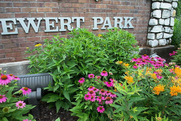 Pollinator-friendly plants are grown at the entrance of Ewert Park. <br /> Globe | Roger Nomer