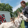 Mary Riley pets her donkey Tali while looking at one her barn quilt creations at her home in Carthage on Tuesday.<br /> Globe | Roger Nomer