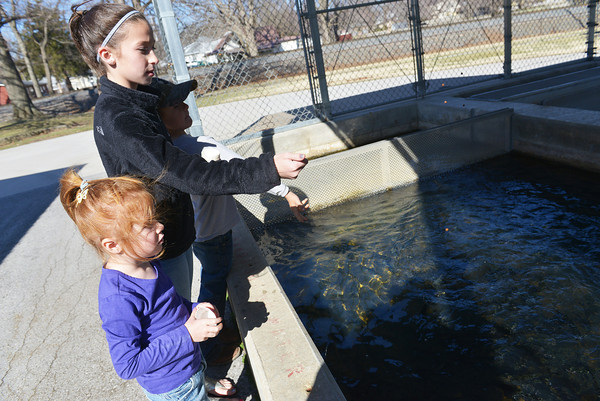 Globe/Roger Nomer<br /> (from left) Emily, 4, Alyssa, 10, and Barrett Henson, 5, feed the fish at the Neosho National Fish Hatchery on Thursday morning.