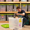 Globe/Roger Nomer<br /> Nathan Hardy, College Heights sophomore, counts inventory on Monday at Rapha House.