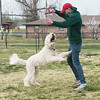 Globe/Roger Nomer<br /> Sam Roberts plays with his dog Murphy at the Parr Hill dog park on Tuesday.