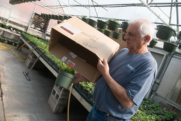 Globe/Roger Nomer<br /> Albert Farris demonstrates a method to cover plants on Thursday.