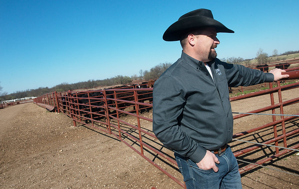 Globe/Roger Nomer<br /> Bailey Moore, owner of the Joplin Regional Stockyards, looks at cattle on Friday at the Stockyards.
