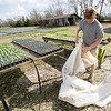 Tami Fredrickson, of Fredrickson Farms, demonstrates the use of a row cover on young cabbage and tomato plants on her Carl Junction farm on Thursday.<br /> Globe | Laurie Sisk
