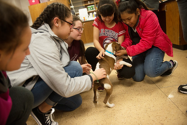 Carthage Junior High School students pet Lincoln during a Wonder Women Club meeting on Monday at the school.<br /> Globe | Roger Nomer