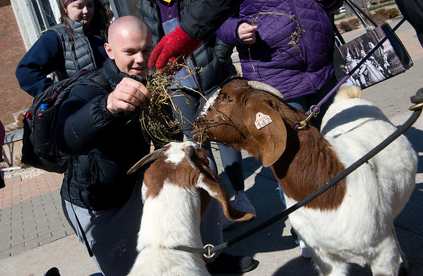Jacob Shull, a Missouri Southern senior from Carthage, Ill., helps feed Brylee and Mylee at Missouri Southern on Tuesday. The visiting goats from the Columbus High School 4-H were part of the university's Robinson Crusoe Week as a nod to the feral goats in the novel.<br /> Globe | Roger Nomer