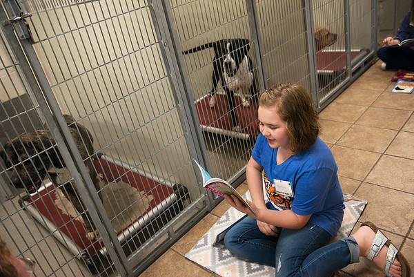 Kaitlyn Sanders, 10, Carthage, reads to a group of dogs on Saturday at the Joplin Humane Society.<br /> Globe | Roger Nomer