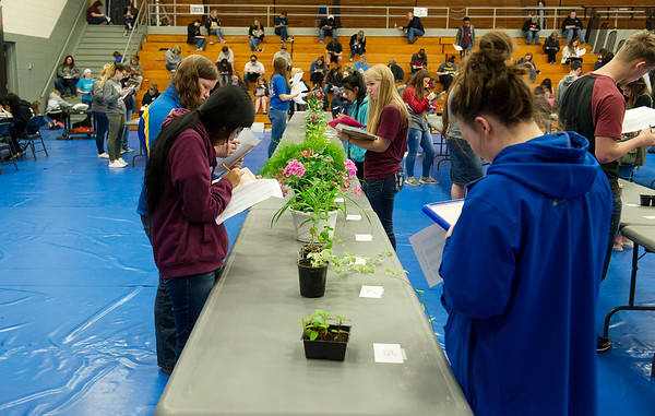 Students work on a floriculture exam during Thursday's Aggie Day at Crowder College in Neosho.<br /> Globe | Roger Nomer