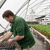 Andrew Van Hoose, horticulture tech 2 with Downstream Casino and Resort, plants at Downstream's greenhouse on Thursday.<br /> Globe | Roger Nomer