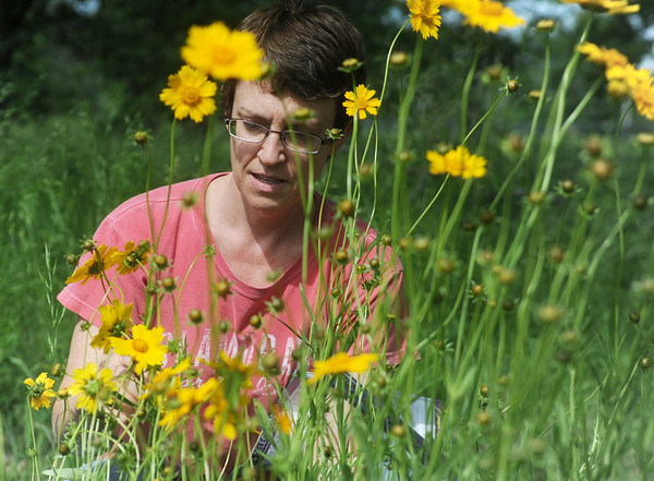 Globe/Roger Nomer<br /> Karen McGlamery, Joplin, looks at a bunch of Lanceleaf Coreopsis during a plant sale by Missouri Wildflowers Nursery at the Wildcat Glades Conservation and Audubon Center's Glades Day on Saturday.