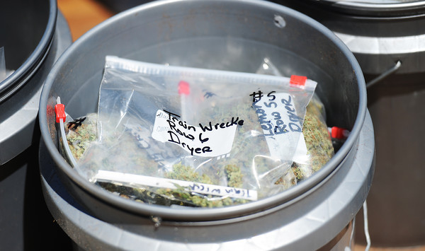 """Globe/T. Rob Brown<br /> Newton County Sheriff's Department confiscations from Friday's marijuana """"indoor grow"""" bust includes 107 bags of processed marijuana with odd names like """"Train Wrecke"""" Monday afternoon, May 13. Officers seized a total of 396 marijuana plants, the bags and a large quantity of grow lights and equipment from the operation. The street price of the whole stash is approximately $850,000."""