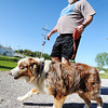"""Globe/T. Rob Brown<br /> Bob McDermid, of Joplin, walks with his Australian shepherd Bailey along the Frisco Trail in the Royal Heights area Saturday afternoon, May 13, 2013. """"I suspect this is the most widely used park in Joplin,"""" McDermid said of the trail. """"I'm out here every day. In the afternoon when we walk, there's usually 35 to 40 regulars. Some we know by name or by the dogs they're walking."""""""