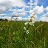 Globe/Roger Nomer<br /> The Ozark Land Trust has maintained this prairie near Mt. Vernon.